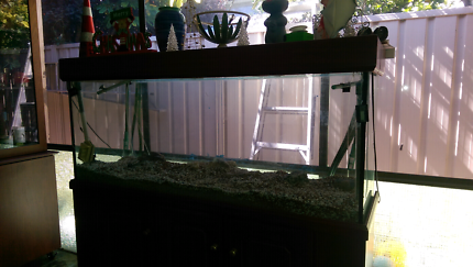 Fish tank great condition