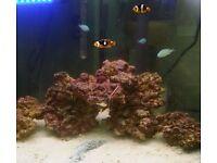 Marine Fish and Live Rock