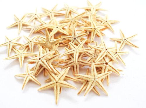 "200 Tan Starfish 1"" -1 1/2"" Philippine Flat Beach Wedding Invitation Crafts Deco"
