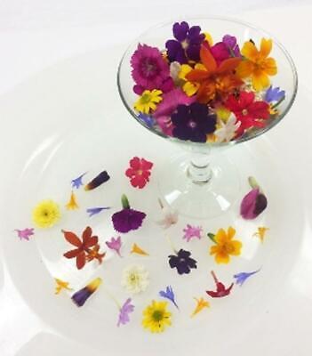 FRESH EDIBLE FLOWERS; Tiny Mixed Organic FREE Overnight w/ICE Multi Colors, 200