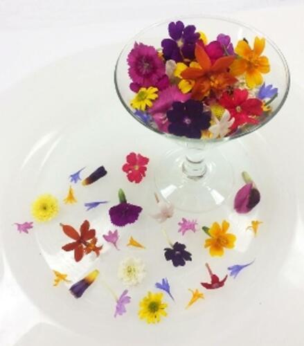 FRESH EDIBLE FLOWERS; Tiny Mixed Organic,FREE Overnight w/ICE Multi Colors, 200