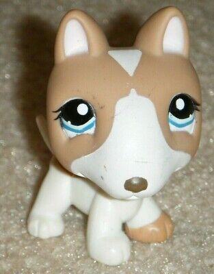 Bull Terrier Puppies - Littlest Pet Shop Pit Bull Terrier Puppy Dog 1095 Tan Cream White Blue Eyes LPS