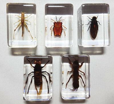Echte Insekten, Sammler-Set Präparate in Kunstharz (T-SET-001)
