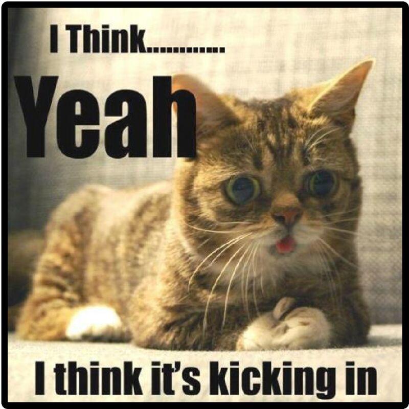 Funny Cat Humor I Think It