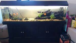 6ft Tank and cabinet Melville Melville Area Preview