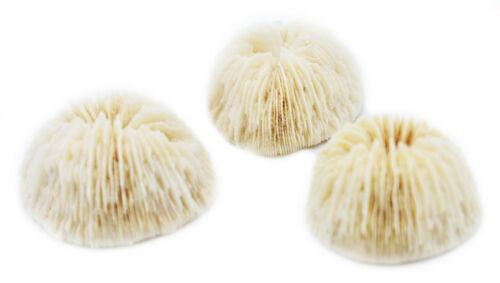 """Set of 3 White Mushroom Corals Home Decor 1-2"""" Nautical Coastal Beach Crafts"""