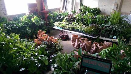 Huge Indoor Plant Sale
