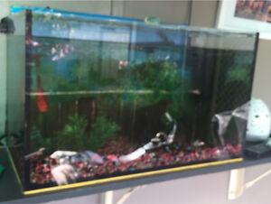 Medium  fish tank + 2 fish Woodberry Maitland Area Preview