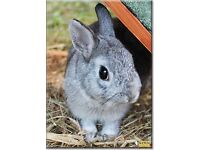 Dwarf baby boy rabbit
