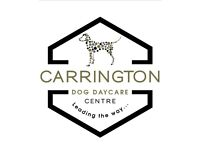 Carrington Dog Daycare Centre