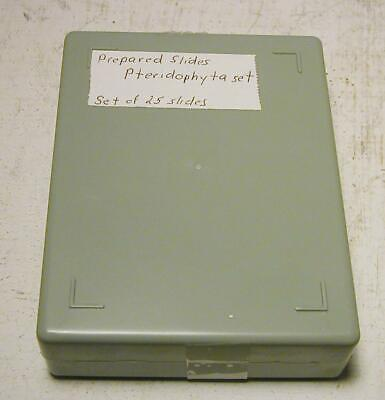 Prepared Microscope Slide Set- Pteridophyta - New