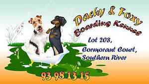 Dachy&Foxy  Boarding Kennel Southern River Gosnells Area Preview
