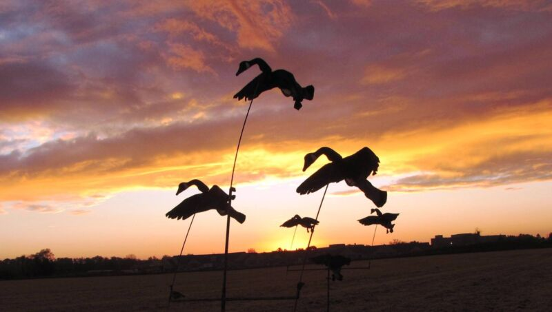 GOOSE TREE SYSTEM w/5 Flying goose decoys SEE VIDEOS and read the hunting story