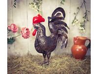 Brand New Hand made Large metal sculpture Gold Metal Chicken 55cm - Quirky Gift Idea