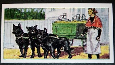 Belgian Sheep Dog Cart    Original Vintage  Coloured Card  VGC