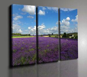 Quadri moderni campo di lavanda quadri moderno paesaggio - Ikea quadri su tela ...