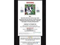DOG £300 reward