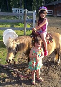 FARM DAYS FOR CHILDREN ALL AGES