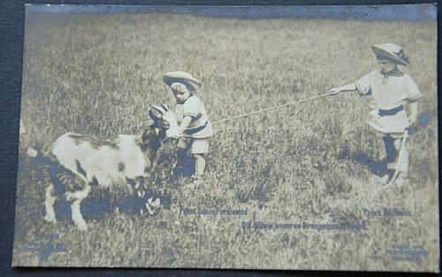 48286 Ak Goat Children With Goat Die Söhne Our Kronprinzenpaares 1909