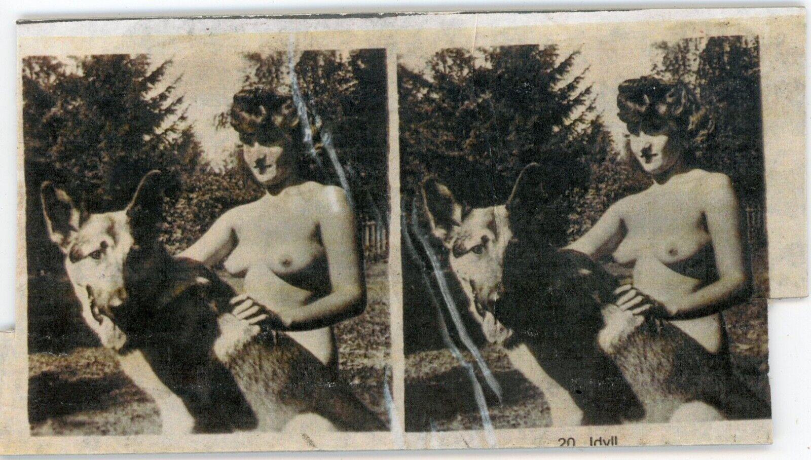 Photo photographie vue stéréo curiosa, une femme et un berger allemand idyll