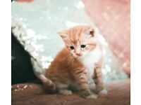 Adorable kittens looking for a loving home