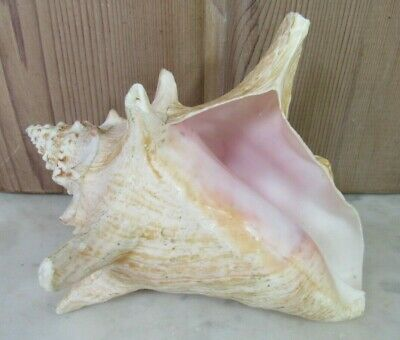 Vintage  Queens Pink Conch Shell Horn Conch Shell Horn