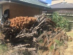 FREE FIREWOOD - Wood from felled tree Mulgrave Monash Area Preview