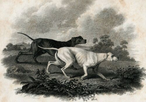 C.1802 HOUND DOGS COPPER ENGRAVING BY JOHN SCOTT, ARTIST SAWREY GILPIN LONDON