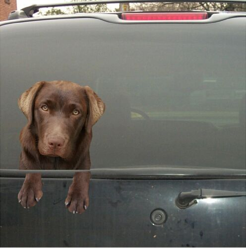 CHOCOLATE LABRADOR LAB  DOG  VINYL  PEEKER DECAL  STICKER FOR CAR WINDOW