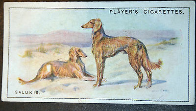 SALUKI  Original 1920's  Vintage Colour Card  VGC