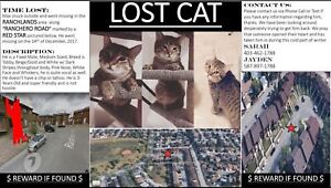 Lost Cat - Ranchlands - Male Tabby