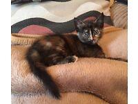 3 beautiful kitten for sale