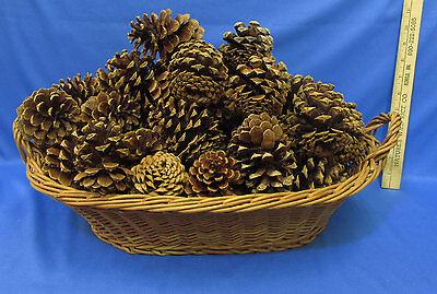 Color Pinecones (Wicker Basket Minnesota Pine Cones 41 Oval Basket Double Handles Almond)