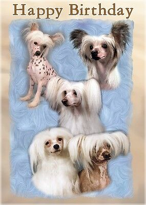 Chinese Crested Dog Design A6 Textured Birthday Card BDCHINESECRESTED-5