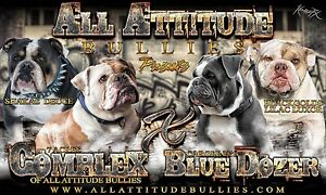Olde English Bulldogge  (Bulldog) Puppies