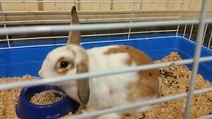 Rabbit- baby Moorebank Liverpool Area Preview