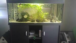 4ft Fish Tank, Matching Stand, Scores of Different Types of Fish! Rutherford Maitland Area Preview