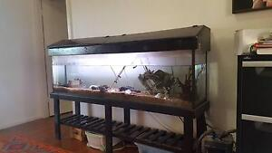 6 Foot Fish Tank - Everything Included! (over $1500 value) Forestville Warringah Area Preview