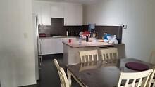 Clean & quiet room for rent in Yokine $160p/w Yokine Stirling Area Preview