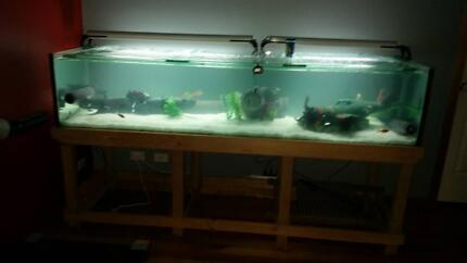 7ft fish tank & stand with extra Langwarrin Frankston Area Preview