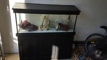 Large Aquarium with heaps accessories OR SWAPS Clyde Casey Area Preview