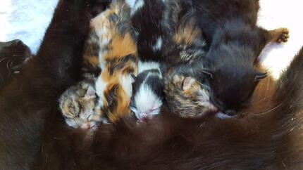 Cheeky Kittens!