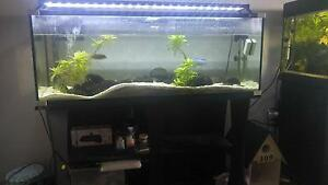 4ft Fish Tank, Matching Stand, 3 Healthy Cichlids & 2 Bristlenose Rutherford Maitland Area Preview