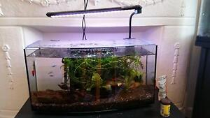 Animates Curved Fish Tank with extras 45L Oakleigh Monash Area Preview