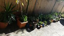 Plants and landscaping sale ( $5 - $60 Negotiable) Bondi Beach Eastern Suburbs Preview