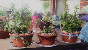 Potted Decorative Plants Madeley Wanneroo Area Preview