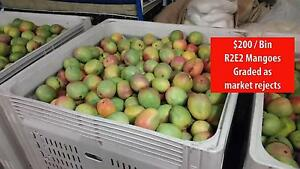 R2E2 Mangoes - Mangoes - Mangoes straight from the orchard Humpty Doo Litchfield Area Preview