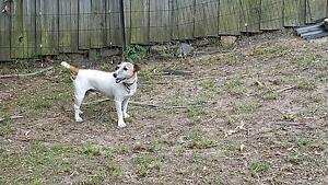 Free Jack Russel Glenhaven The Hills District Preview