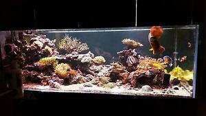 Large Marine Aquarium and All Livestock Mullaloo Joondalup Area Preview