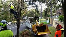 Business For Sale Tree Services in Sydney, Turnover: +500,000.00$ Sydney City Inner Sydney Preview
